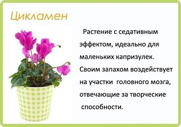 Полезные цветы для детской