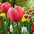 Сочинения (топики) «Весна / Spring» на английском языке