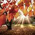 Сочинения (топики) «Осень / Autumn» на английском языке