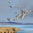 """Шкільні твори для 7-го класу за повістю Михайла Стельмаха """"Гуси-лебеді летять"""""""
