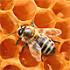 что делать если ребенка ужалила пчела
