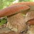 Пословицы о грибах