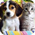 Поговорки про собак и котов