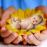 Аватар пользователя iguanac