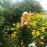 Аватар пользователя VaLLenTina